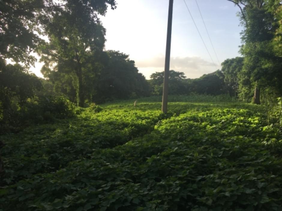 Hermoso terreno en venta en zona boscosa y muy fresca.