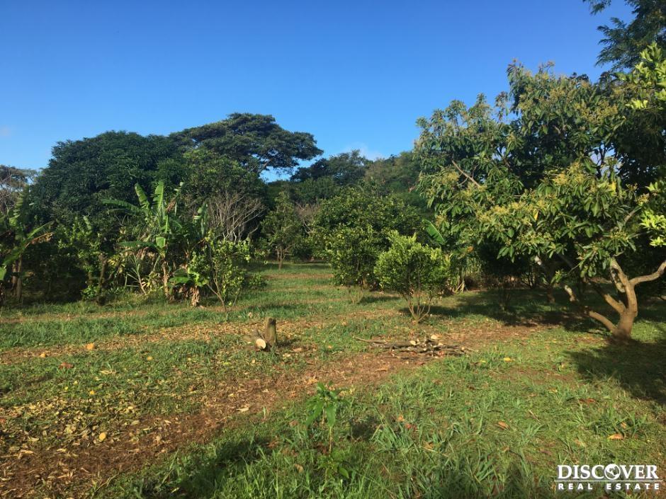 Quinta de cítricos y caña de azúcar en venta en carretera Panamericana Sur