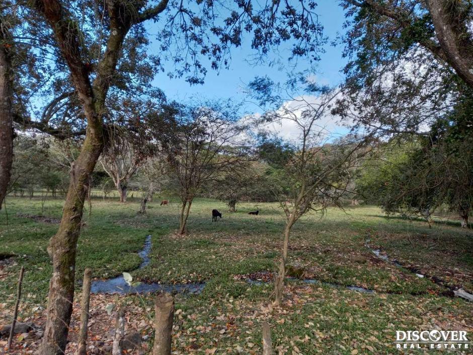 Finca Ganadera y Agricola  en Venta en Jinotega