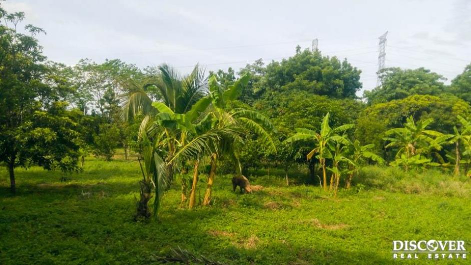 Terreno en venta ubicado en Nindiri